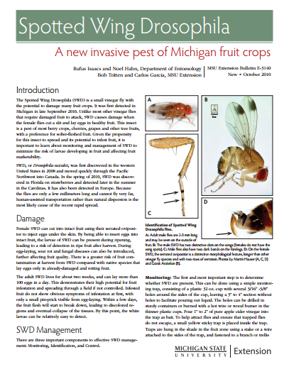Spotted Wing Drosophila: A New Invasive Pest of Michigan Fruit Crops (E3140)