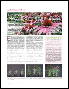 Evaluating new Echinacea cultivars