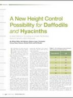 A new height control possibility for daffodils and hyacinths