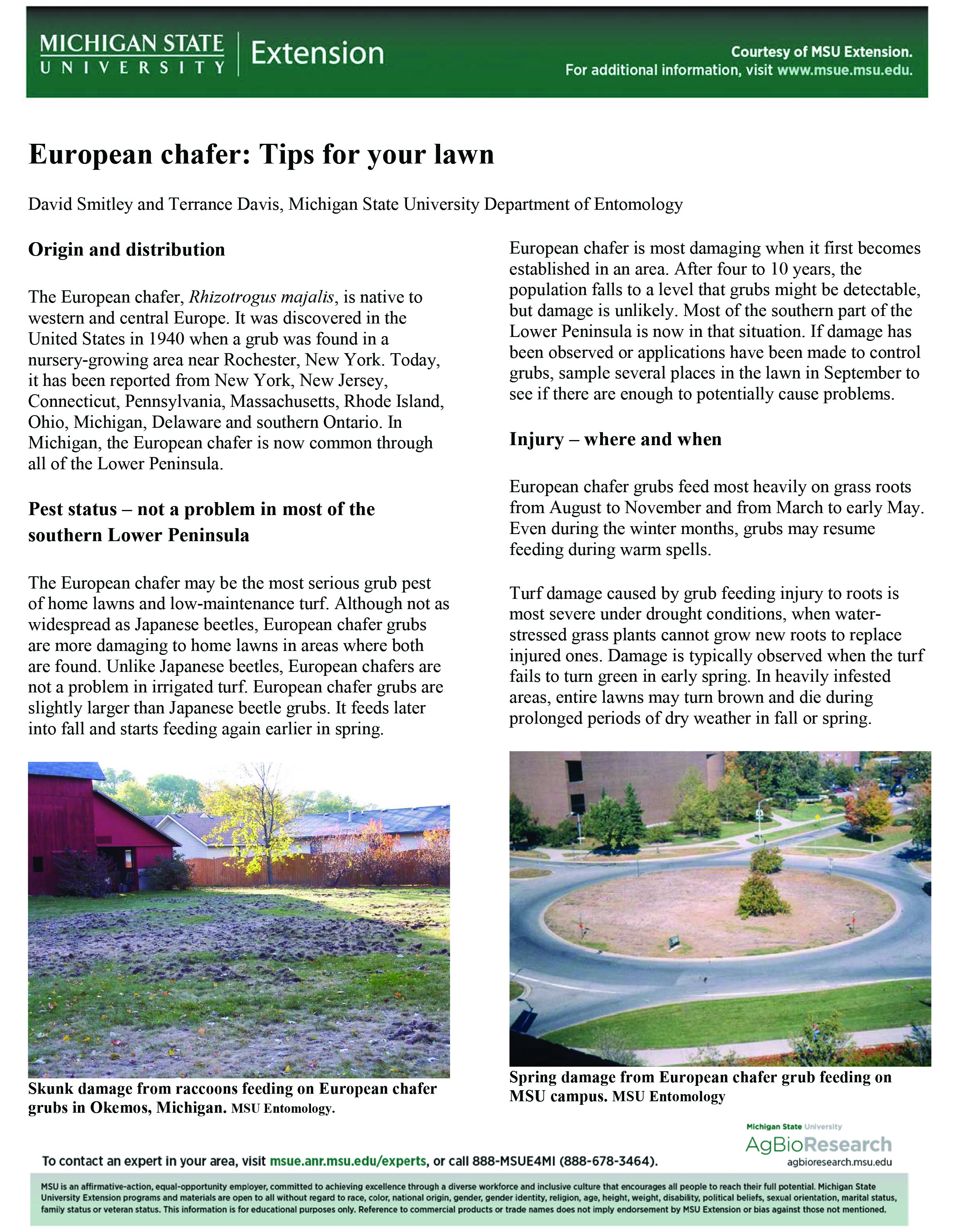 European chafer: Tips for your lawn