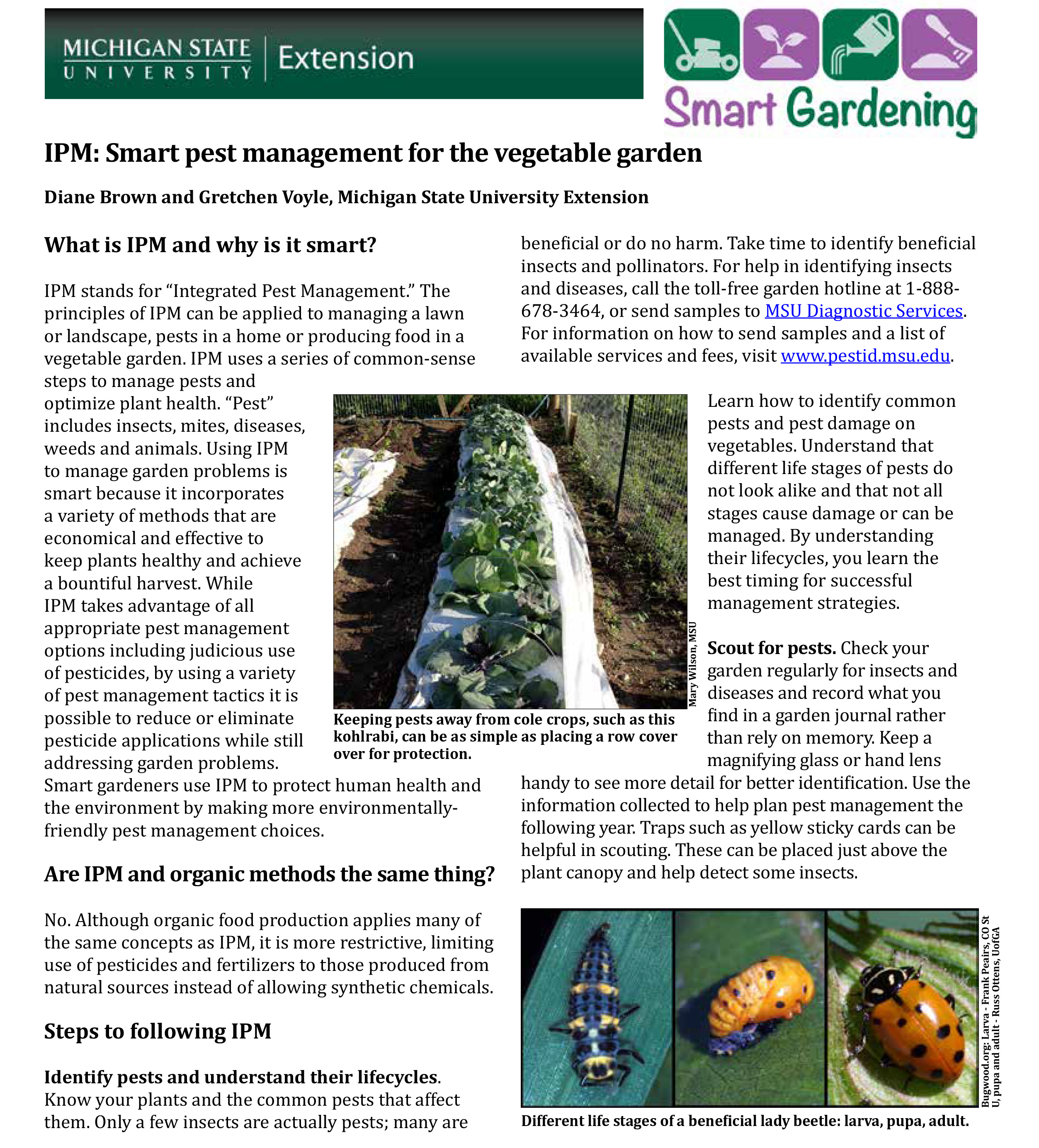 Ipm smart pest management for the vegetable garden msu extension - Smart gardening small steps for an efficient activity ...