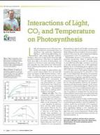 Interactions of light, CO2, and temperature on photosynthesis