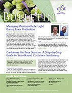 Managing photosynthetic light during liner production