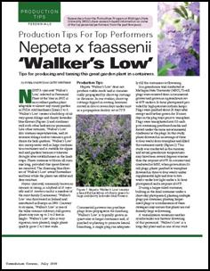 Production tips for top performers: Nepeta x faassenii 'Walker's Low'