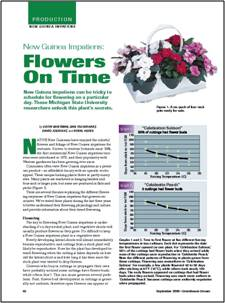 New Guinea impatiens: Flowers on time