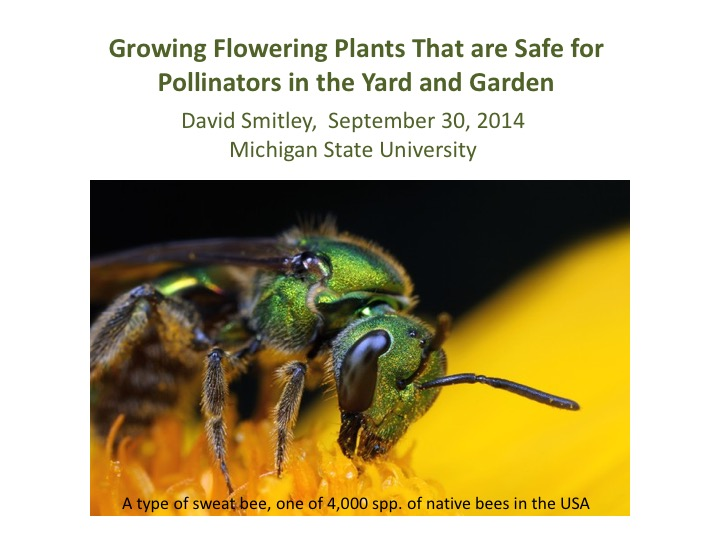 Growing Flowering Plants that are Safe for Pollinators in the Yard and Garden