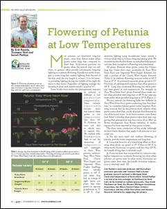 Flowering of petunia at low temperatures