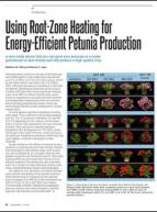Using root-zone heating for energy-efficient petunia production