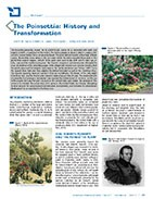The Poinsettia: history and transformation