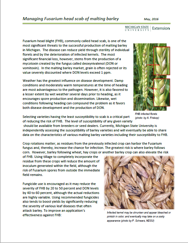 Managing Fusarium head scab of malting barley