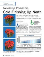 Revisiting poinsettia cold finishing up north.