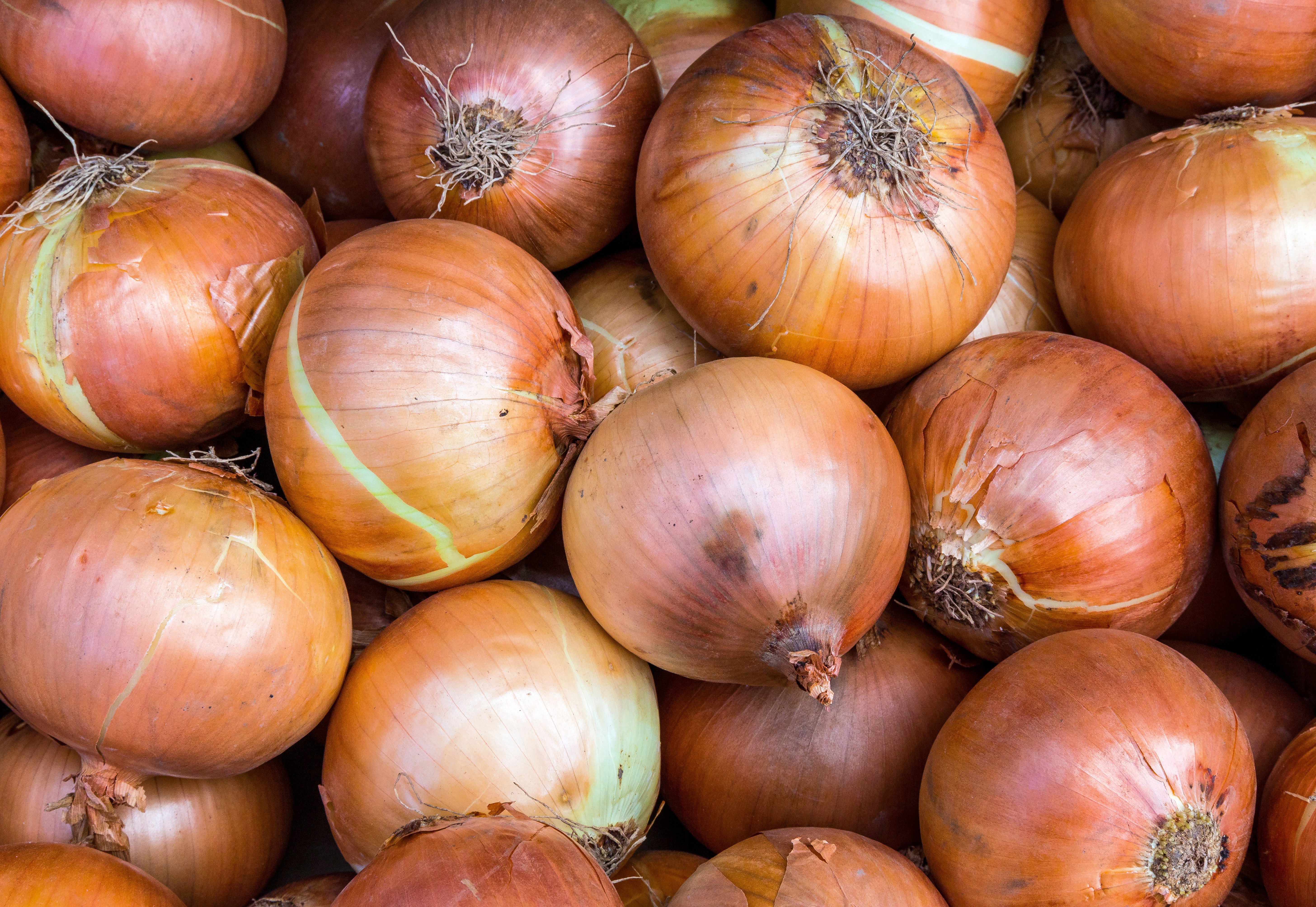 How to Grow Onions - Part 1