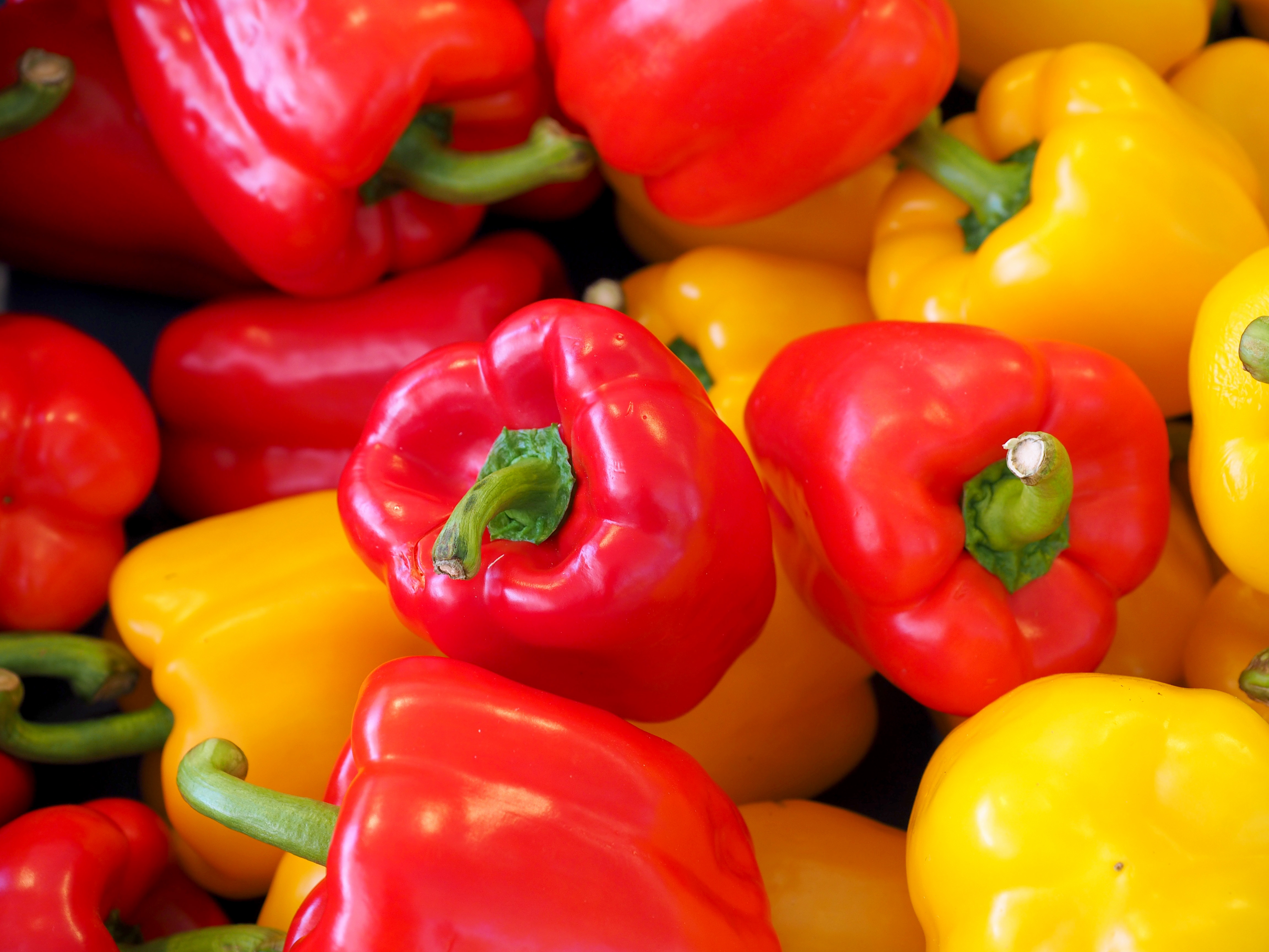How to Grow Peppers - Part 1