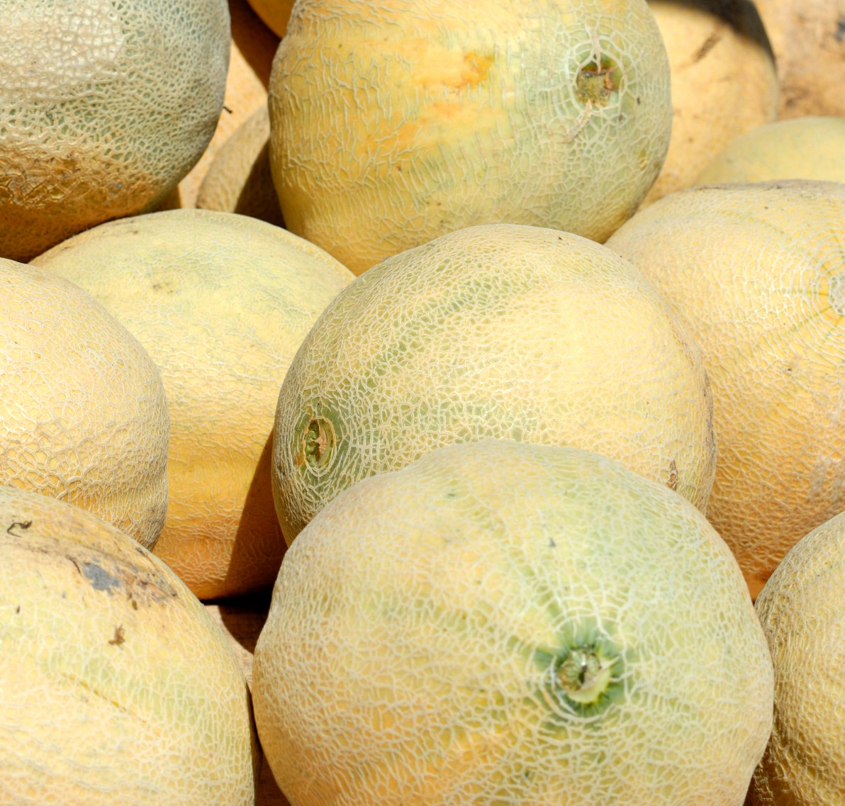 Cantelope Fruit / A wide variety of fruit cantaloupe options are available to you, such as taste, drying process, and packaging.
