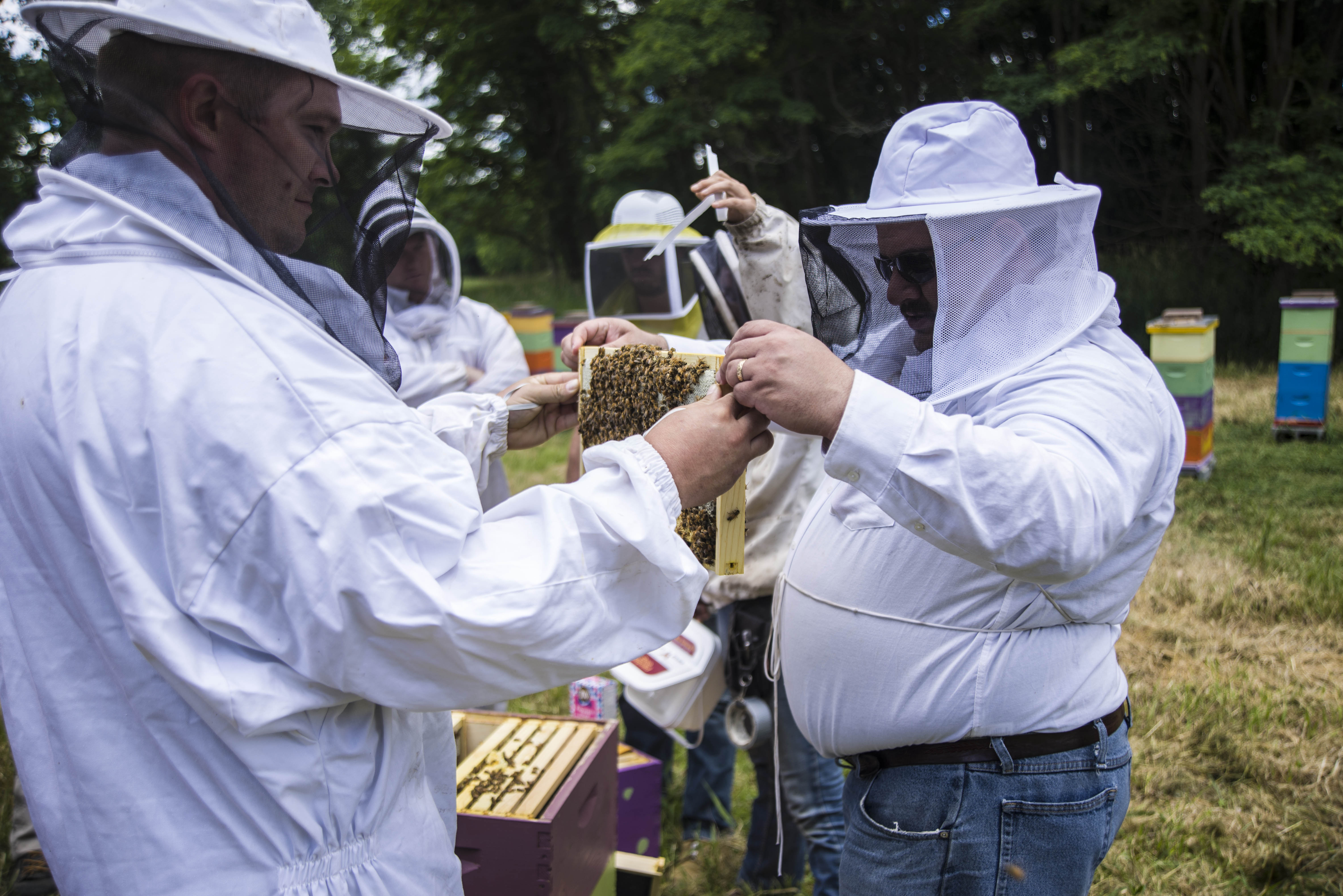 Heroes to Hives participants learn about beekeeping.